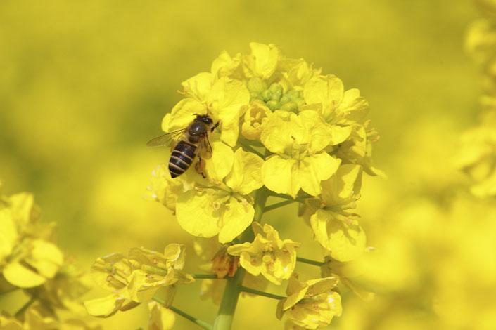 Web社内報を進化させるミツバチのお話