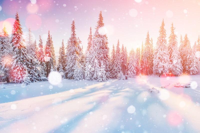 冬に楽しみなものとは?冬に取り上げたい社内報のネタ